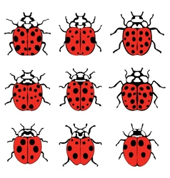 cheerful ladybugs vector image