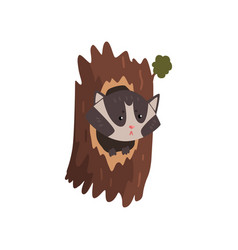 Cute raccoon sitting in hollow of tree hollowed vector