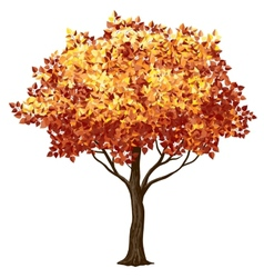 Fall tree vector image
