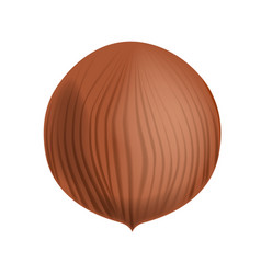 Full and unpeeled realistic hazelnut close vector