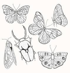moths butterflies and beetles set of vector image