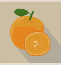 orange and slices isolated flat style vector image vector image