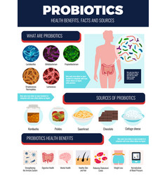 probiotics infographic set vector image