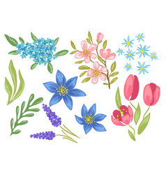 set of spring flowers beautiful decorative vector image
