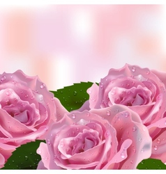 Background Invitation cards with roses vector image vector image