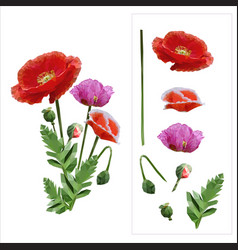 set of colored mosaic poppies on white background vector image