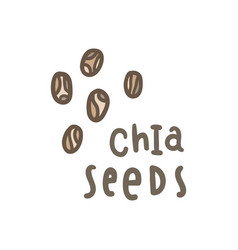 chia seeds superfood vector image