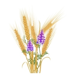 Ears of wheat tied with wildflowers bird vetch vector