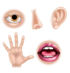 Five senses body parts vector