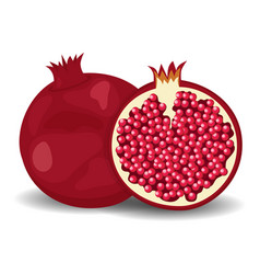 juicy pomegranate isolated on white flat style vector image