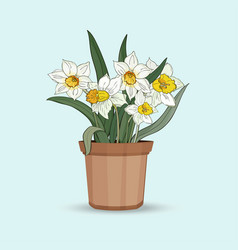 narcissus a bouquet flowers in a flower pot vector image