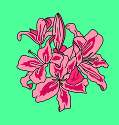 pink lily flowers digital sketch isolated on green vector image