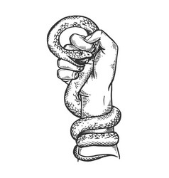 snake in hand fist engraving vector image