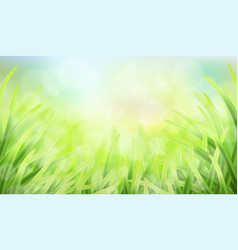 grass glare and effect bokeh vector image vector image