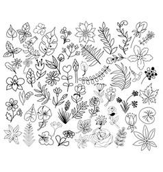 Big set vintage botanical decorative floral vector