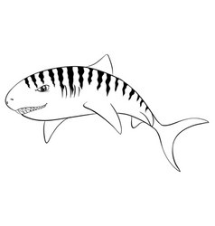 Drafting animal for tiger shark vector