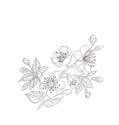 flower line vector image