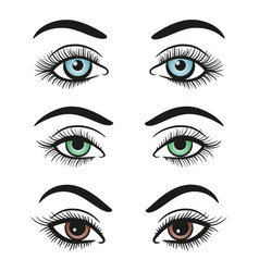 basic colors female eyes and brows vector image