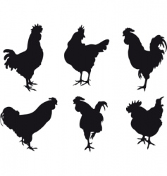 chickens vector image