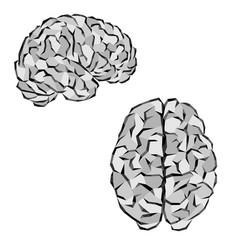 gray brain silhouettes vector image