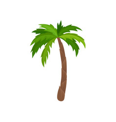 Palm tree with bright green leaves plant of vector