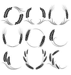 wheat or barley ears harvest grain growth vector image