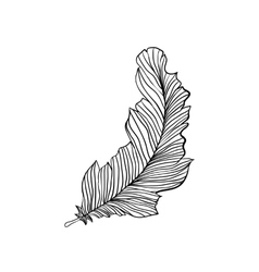 Decorative isolated feather vector image vector image