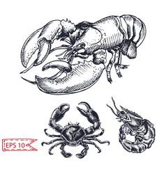 sketch - crab shrimp lobster vector image