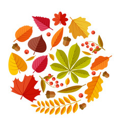 flat autumn leaves colorful fall park leaf maple vector image