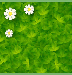 green backdrop with grass and camomiles vector image