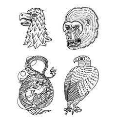 head of wild animal predator eagle falcon monkey vector image