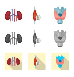 isolated object of body and human icon collection vector image