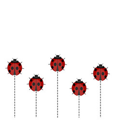 ladybug pattern on white background vector image