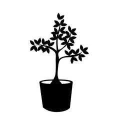 Plant in pot tree nature icon graphic vector