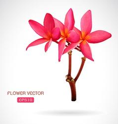 Image frangipani flower vector