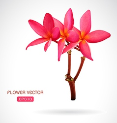 Image of frangipani flower vector