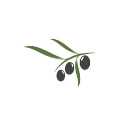 Olive icon vector