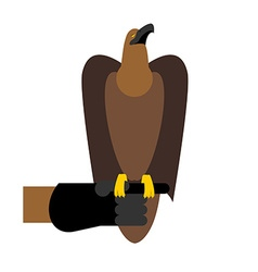 Falcon hunting Birds of prey sitting on hand vector image vector image