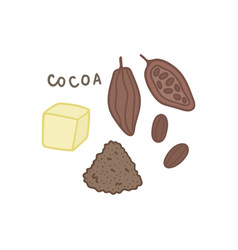 cocoa superfood isolated on white vector image