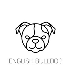 english bulldog linear face icon isolated outline vector image