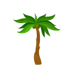 Palm tree with coconut fruits bright green leaves vector