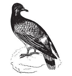 Pigeon vintage vector