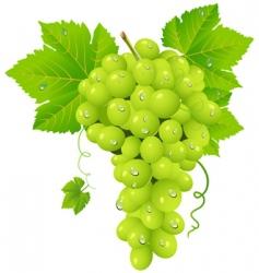 White grape cluster vector