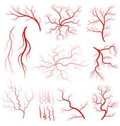 vein set human vessel eye veins vector image