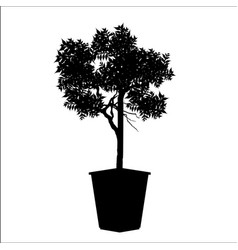 Bonsai tree plant silhouette icons on background vector
