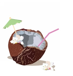 Fresh Coconut isolated vector