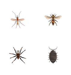 Realistic wasp gnat arachnid and other vector