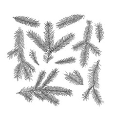 Set of fir tree branches isolated on white vector