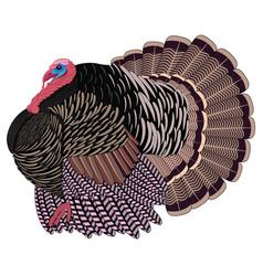 Big realistic turkeycock vector