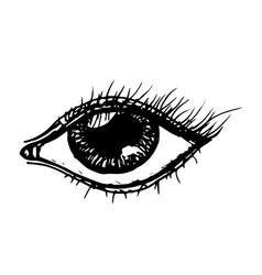 eye hand drawn sketch vector image